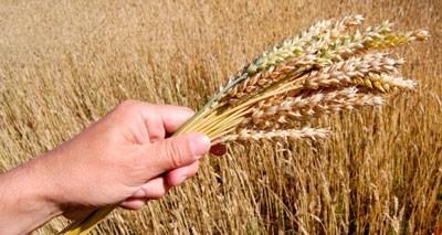 Препараты «НЭСТ М» в помощь производителям сельскохозяйственной продукции