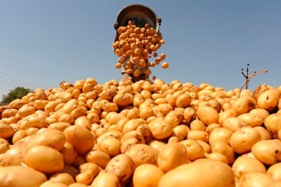 primenenie-preparata-tsirkon-na-kartofele