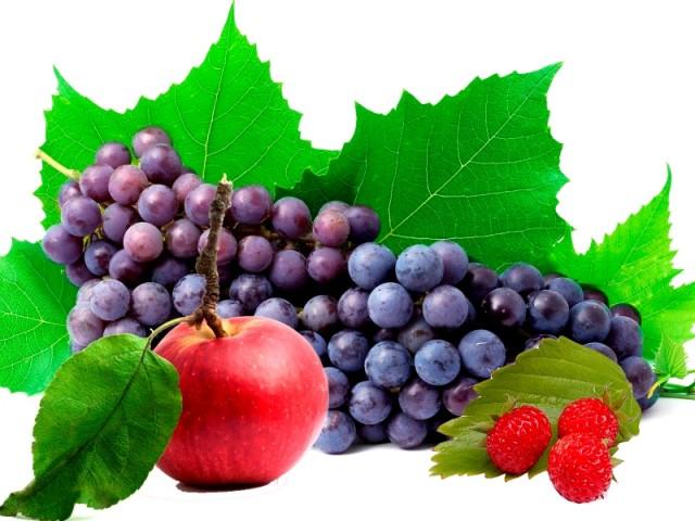 regulyatory-rosta-i-udobreniya-v-sisteme-zashchity-plodovykh-i-vinograda